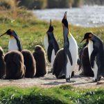 pinguino3